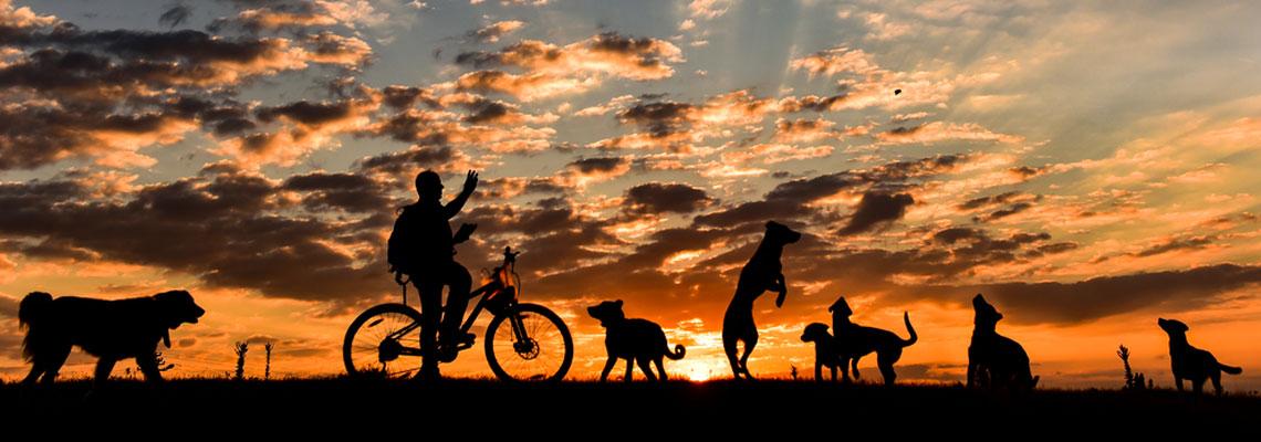 Cinco raças de cachorros perfeitas para seus passeios de bike