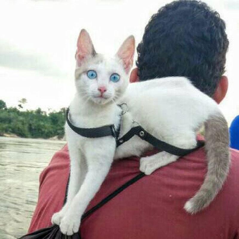 Com gatinha na garupa, dupla planeja pedalar até o Alasca