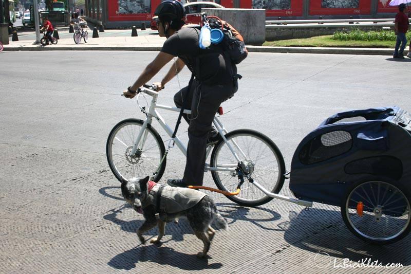 cachorro e bicicleta