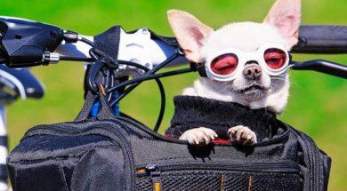 cachorro-mobikers