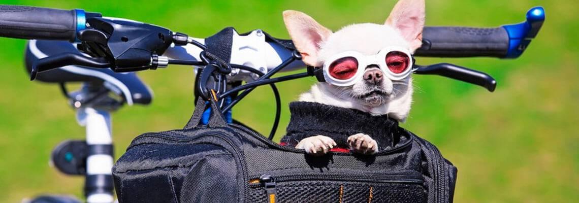 Vai de bike? Leve seu cachorro junto!